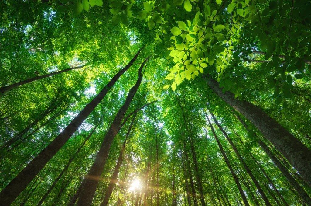 Naturorientiertes Coaching – Du Bist Natur!
